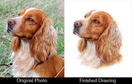 Dog Comparison Thumbnail Image